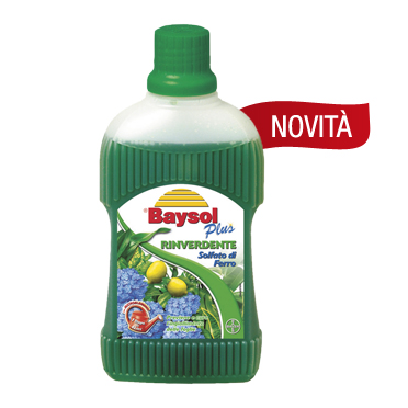 BAYSOL RINVERDENTE ML.500 BAYER