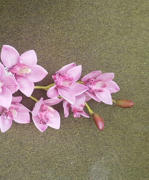 CYMBIDIUM BEAUTY 8 fiori cm 74
