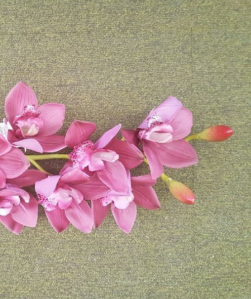 CYMBIDIUM PORPORA 8 fiori cm 74