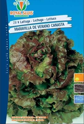 BUSTA LATTUGA MARAVILLA DE VERANO CANASTA 50 G ROYAL SLUIS