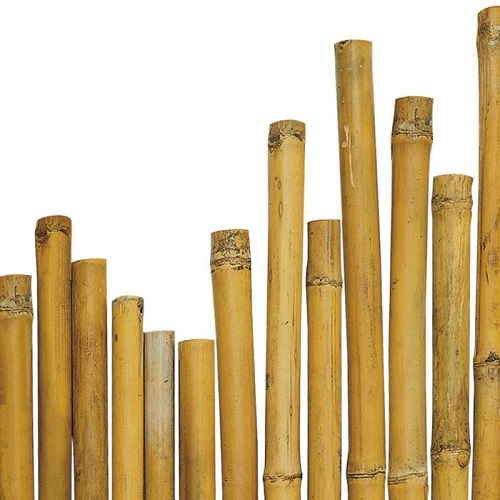 CANNA BAMBOO h 150 cm  diametro 22-24 mm