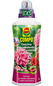 COMPO AZALEE RODOD. CAMELIE ML.500